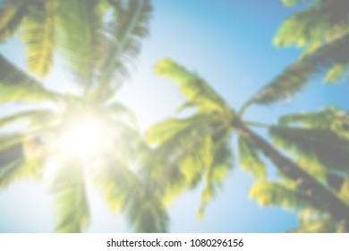 Looking up at palm trees and beautiful blue sky.
