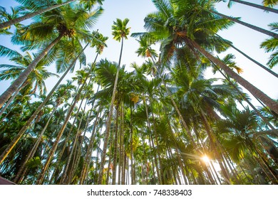 Looking up at palm trees with a sunrise in the background.
