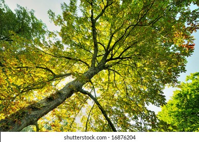 Looking up to see the colorful leaves, showing a hint of autumn.