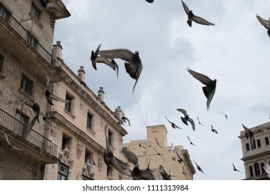 Looking up at the sky as a flock of pigeons fly through the air in the Plaza of San Francisco in Old Town Havana, Cuba, also known as Pigeon Square.