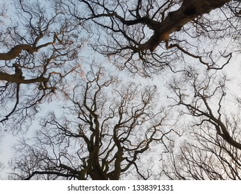 Looking up to the sky through the branches of a tree