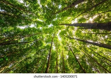 Looking sky to tree tops