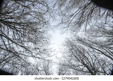 Looking at the sky under the trees in the Navarrese Pyrenees in Spain