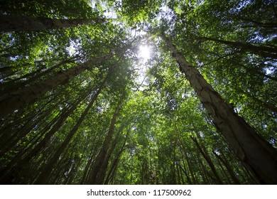 Looking skyward to tree tops