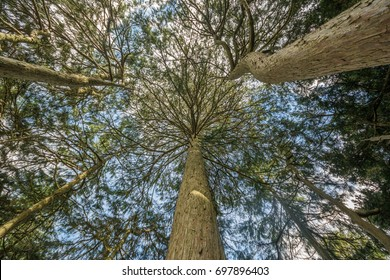 Looking up at some trees