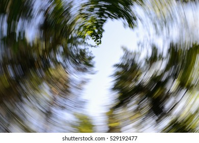 Looking up through a canopy of trees taken using a long exposure with a turning motion to create a spiral effect.