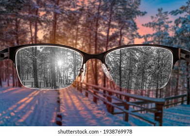 Looking through glasses to black and white sunset in winter forest view focused in women's glasses. Color blindness. World perception during depression. Medical condition. Health and disease concept.