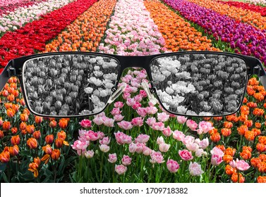 Looking through glasses to bleach nature landscape - tulips field. Color blindness. World perception during depression. Medical condition. Health and disease concept.