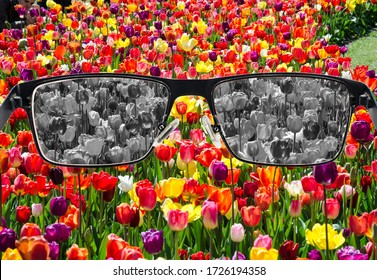 Looking through glasses to bleach tulips field. Color blindness. World perception during depression. Medical condition. Health and disease concept.