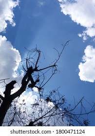 Looking up through leafless tree slihouette to a blue, cloudy and sunny sky above