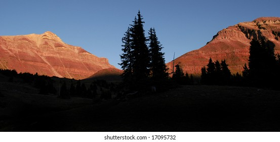Looking up through several pine trees in forest at mountains with sunlight