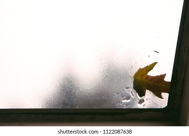 Looking up through a skylight from inside out. On the skylight are raindrops and a fallen leaf.