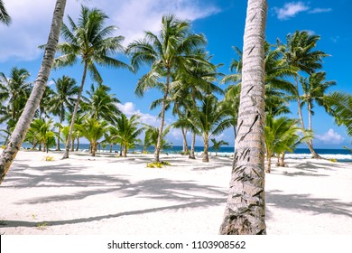 Looking through tropical palm trees on a white sand beach on a sunny day towards the South Pacific Ocean. Photographed on Upolu Island, Western Samoa.