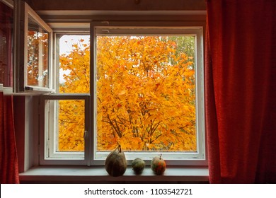 Looking through window on the autumn orange yellow tree. Three pumpkins on the wood window-sill.