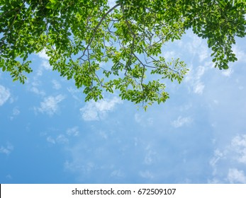 Looking up toptrees the blue sky and blurred trees. Azure sky and bright cloud in daytime is beautiful. Branch of tree is beautiful bright green leaf and It is refresh for looking on summer time