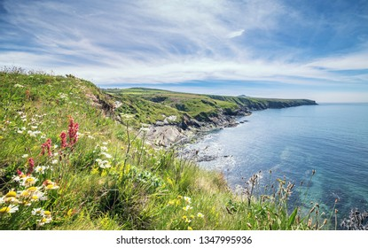 Looking towards St Davids Head from the top of cliff full of wildflowers.  Abereiddy Bay in Pembrokeshire, Wales, UK