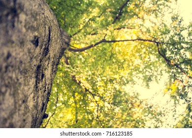 Looking up at a tree