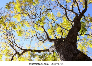 Looking up to the tree above