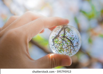 Looking the tree pass through ball glass that hold in the hand.