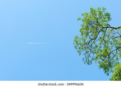 Looking up the tree with plane passing by