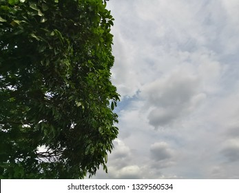 looking up the trees and clouds