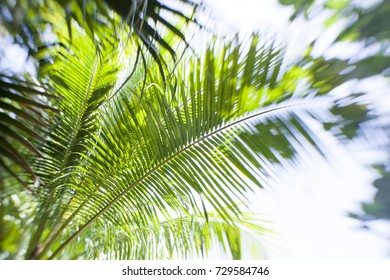 Looking up at a tropical palm tree.