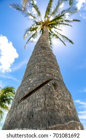 Looking up at a Tropical Palm Tree in the Sun