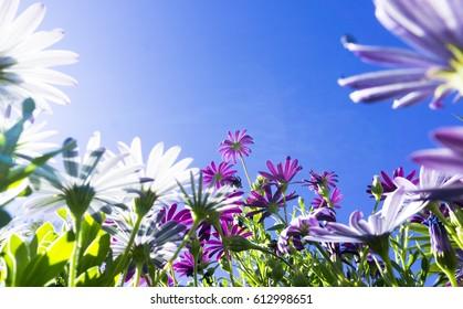 Looking up trough blooming flowers