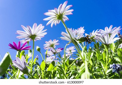 Looking up trough blooming flowers to a blue sky
