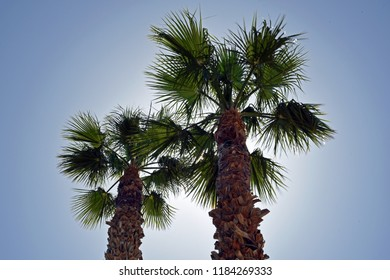 Looking up two palm trees on a sunny day