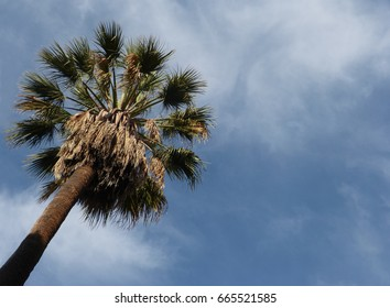 Looking upward at a palm tree in Los Angeles
