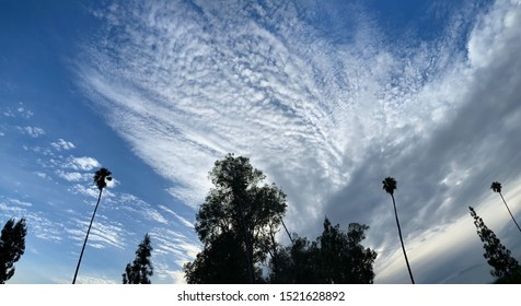 Looking upwards at a dramatic cloudy sky with silhouette palm trees swaying in the wind, in Southern California.