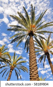 Looking upwards at palm trees against a cloudy, blue sky.