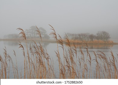 looking at the water through Marsh Grass on Assateague Island, Virginia against a misty background