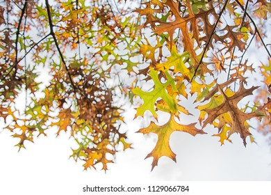 Looking up at yellow and brown leaves in fall / autumn