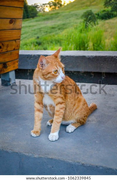 a looking-forward brown cat