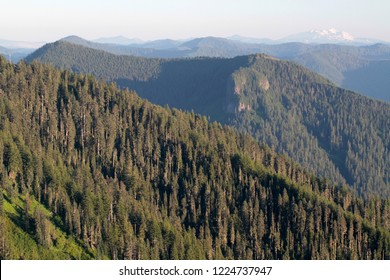 Lookout Mountain from Carpenter Mtn fire lookout, H.J. Andrews Experimental Forest, Oregon, USA