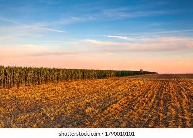 収穫後のトウモロコシ畑と空き地の間の眺め塔。 晴れた日の下に刈り込んだ小麦畑のパノラマ写真。 チェコ共和国