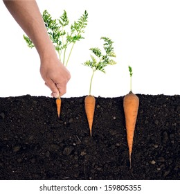 Looks can be deceptive.  Carrots in the ground.