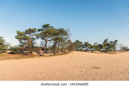 The Loonse en Drunense Duinen is a national park situated in the south of the Netherlands, between the cities of Tilburg, Waalwijk en 's-Hertogenbosch. The photo was taken in the spring season.