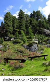 Loooking up by Zirbenweg, Patscherkofel mountain