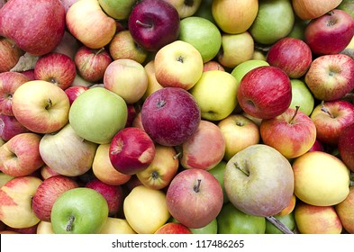 Loose, bulk apples, mixed varieties, red, golden, and green, at harvest time.