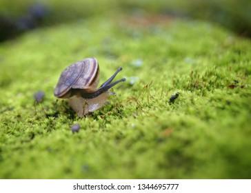 Asnailis, in loose terms, a shelledgastropod. The name is most often applied toland snails,terrestrialpulmonategastropodmolluscs.
