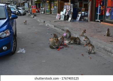 Lop Buri, Thailand - December 18, 2013: Whild monkeys in the city center of Lopburi
