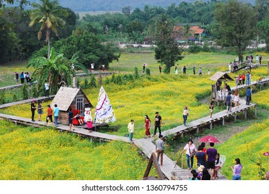 Lopburi Thailand - December 22 2018  : Many tourists come to see the yellow cosmos flowers field is blooming with wooden bridge on cosmos field in Lopburi, Thailand.