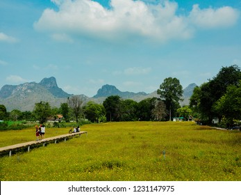 LOPBURI, THAILAND - JULY 24 : Many tourists come to see the yellow cosmos flowers field is blooming, Old wooden bridge in the middle of yellow cosmos field, on the July 24, 2018 in Lopburi, Thailand.