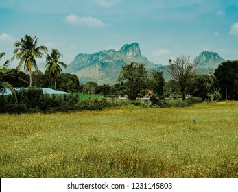 LOPBURI, THAILAND - JULY 24 : Yellow cosmos flowers in field are blooming,Mountains are set on the back of the beautiful scenery at Lopburi on the July 24, 2018 in Lopburi, Thailand