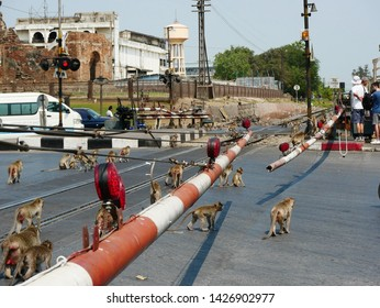 Lopburi, Thailand-February 25, 2019: Tourists watch Crab Eating Macaques (Macaca fascicularis) that live in the area of the Monkey Temple (Phra Phrang Sam Yot) wander on the nearby railway crossing.