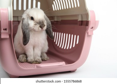 lop-eared rabbit in the animal carrier