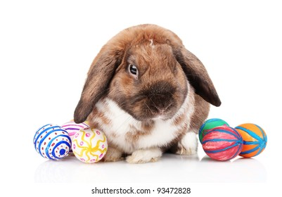 Lop-eared rabbit with eggs isolated on white